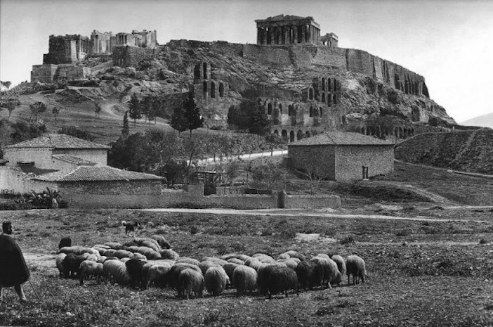 Sheep under the Acropolis,
